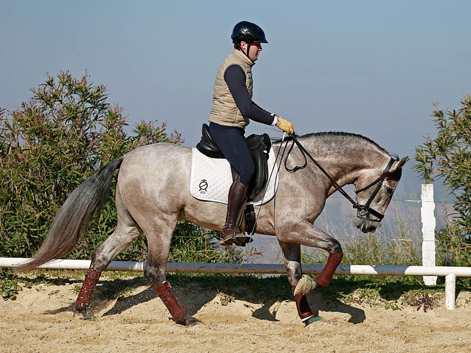 PRE-Andalusier-spanische-pferde-Passion-Barock